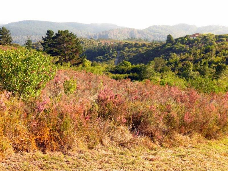 Property For Sale in Private Nature Reserve, Knysna 46